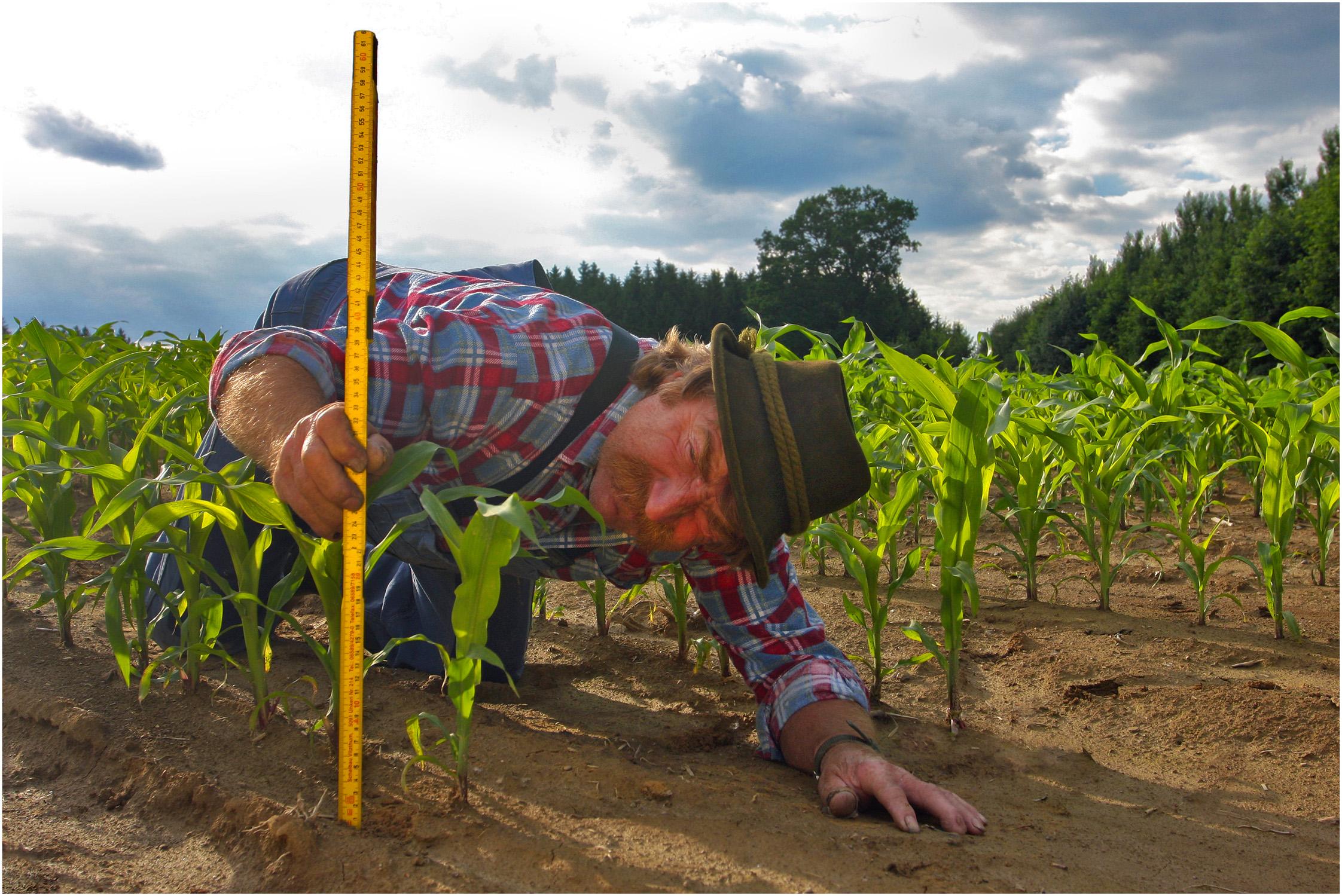 Regional Advisor on Food Security Issues | Knowledge Hub