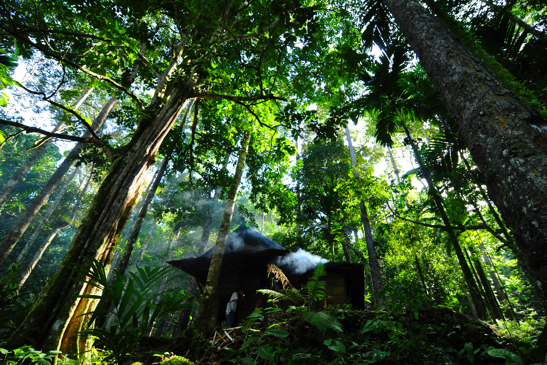 Call for Proposals - Globally threatened trees | Knowledge Hub