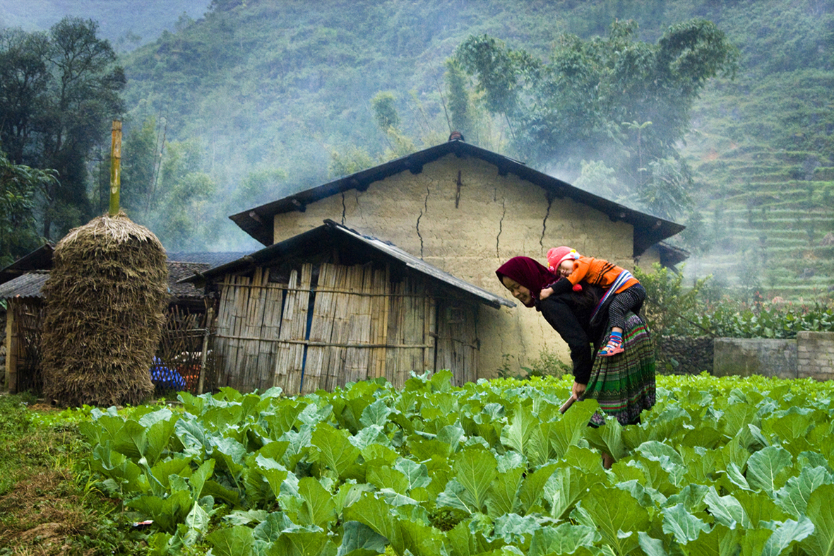 PhD Fellowship for Vietnamese nationals: Seed Systems, Impact Pathways and Nutrition