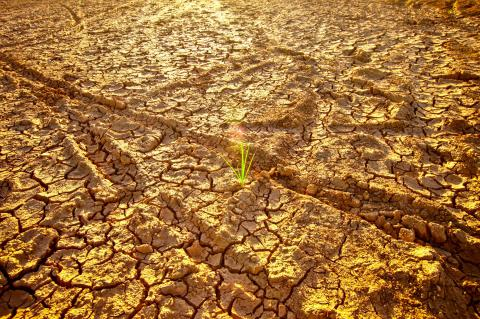 Consultancy: Assessment on Land Degradation Neutrality