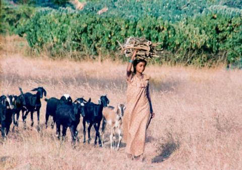 Get funds for your Field Research as a PhD Student