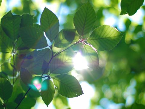 Hurry up and Join the Nature Conservancy Photo Contest 2019 now!