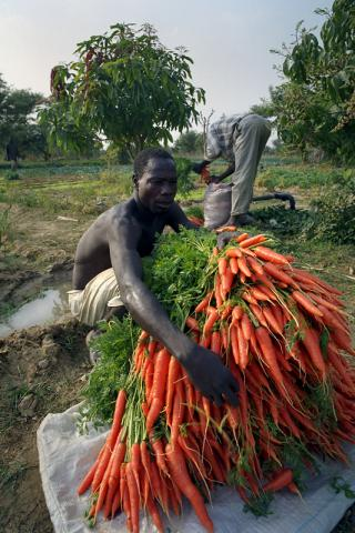 Sustainable Development Goals Center for Africa is looking for Agriculture Specialist