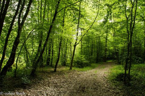 This is your chance to get your fellowship done with Kleinhans Program!