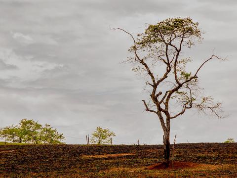 2 days to apply for the position of Environment Affairs Intern