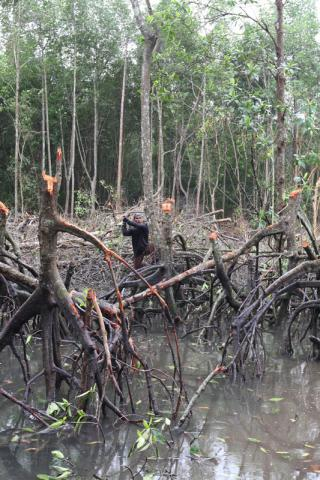Save the date to attend the Washington Forest Legality Week 2019