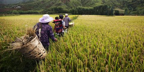 Receive Funding for your Reforestation Projects