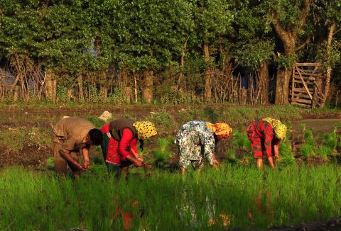 Get your fellowship done with the Asia Foundation