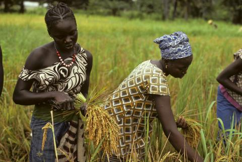 USAID-Dakar Grant: Feed the Future in Senegal